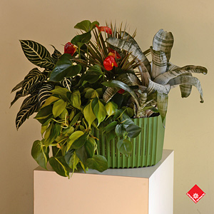 This planter can be hung on any wall with more planters like it to make a living wall.