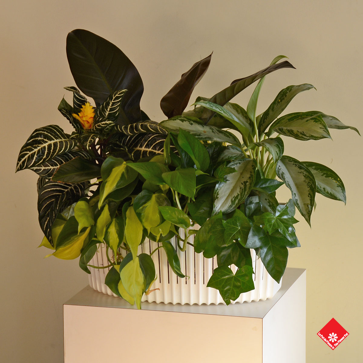 Use different coloured planters to make a wall of life in your urban Montreal home.