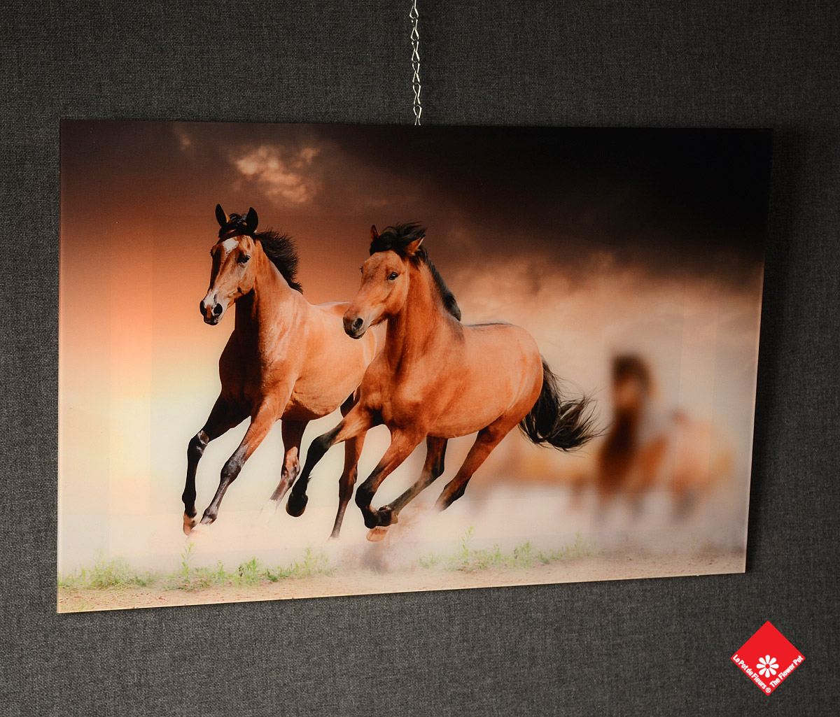 An image on acrylic of the wild beauty of running horses for your wall.