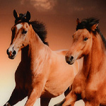 An image on acrylic of the wild beauty of running horses for your wall