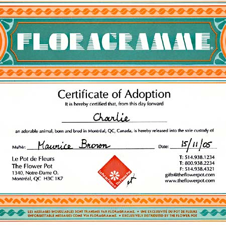 Adoption certificate from your Montreal toy store.
