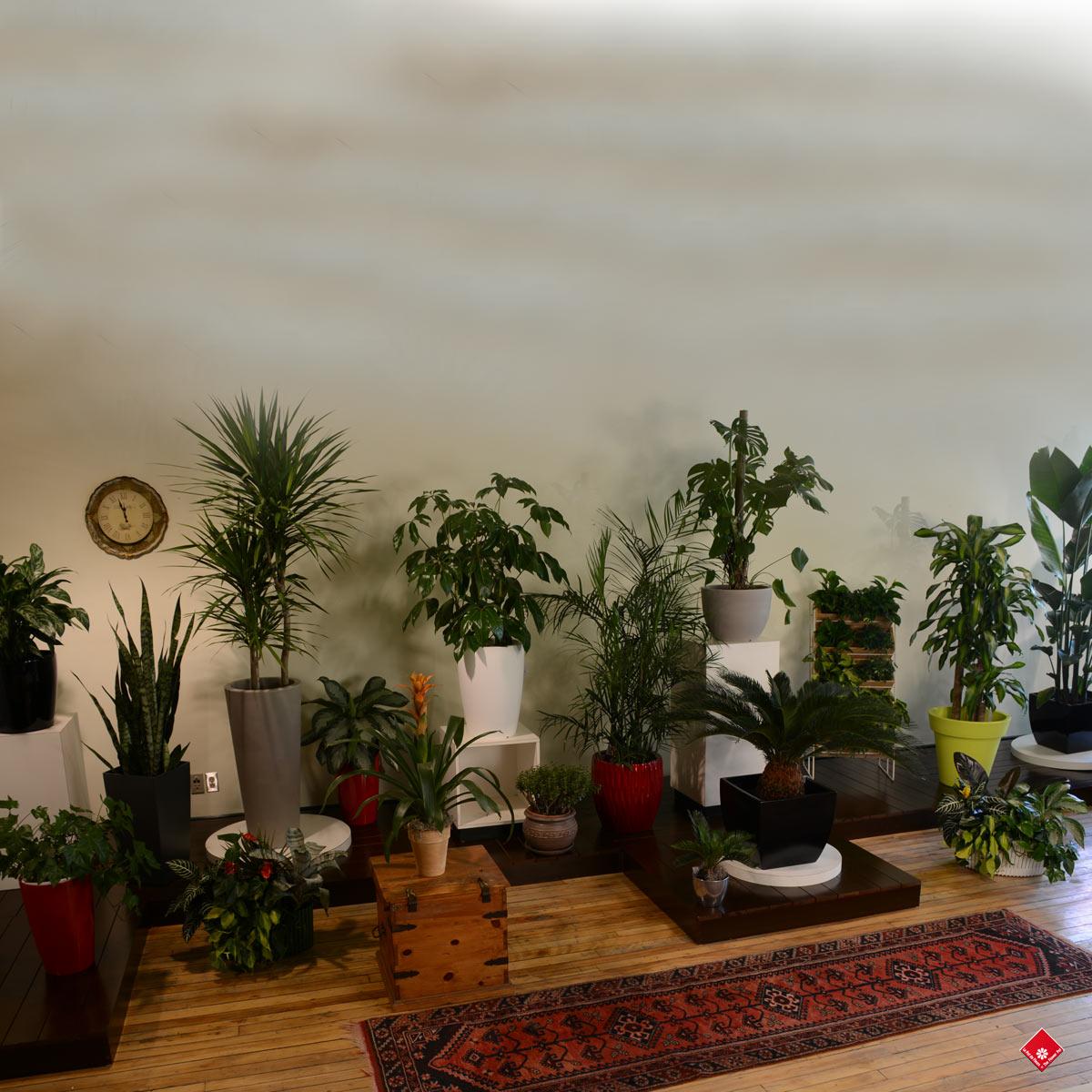 0 Salon Vert Plants