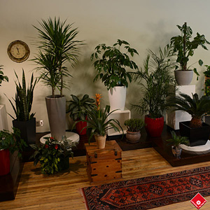 Visit The Flower Pot's Salon Vert to pick your own green plant displayed here in designer cache-pots.