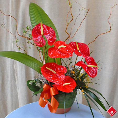Anthurium arrangement.