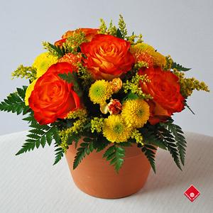 Yellow flower arrangement by local florist the flower pot yellow flowers in a terra cotta pot mightylinksfo