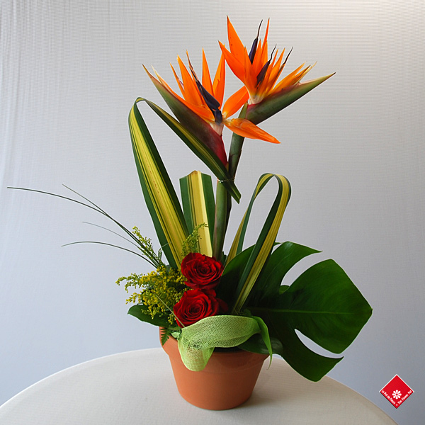 Exotic bird of paradise in a tropical flower arrangement.