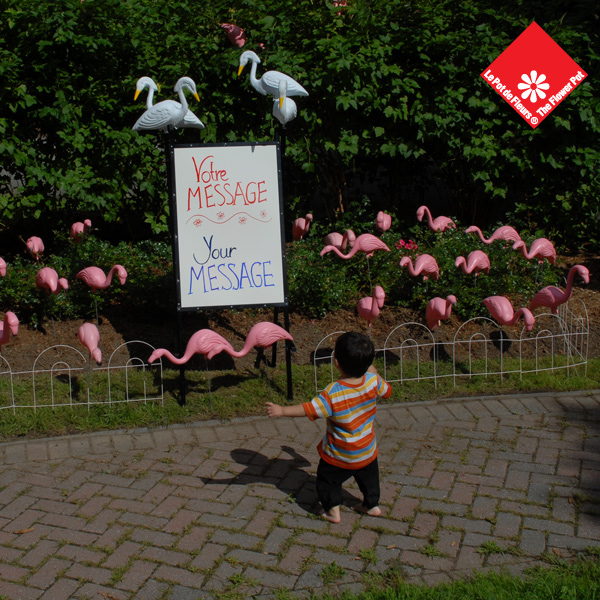 Birthday yard signs and 40 party flamingos in Montreal