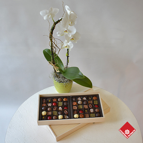 Box of 50 chocolates and flowering orchid plant