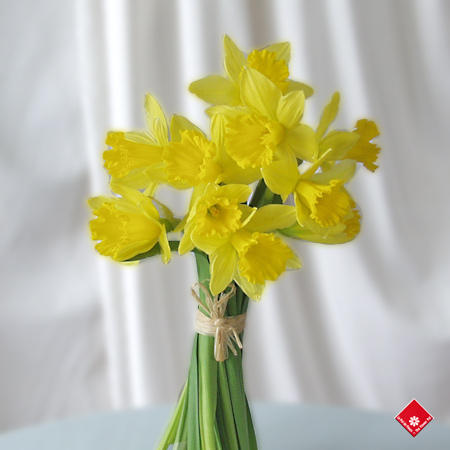 Yellow daffodils for Easter flowers in Montreal.