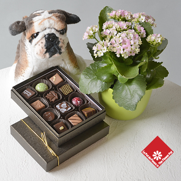 Spunky, the plush dog with chocolates.