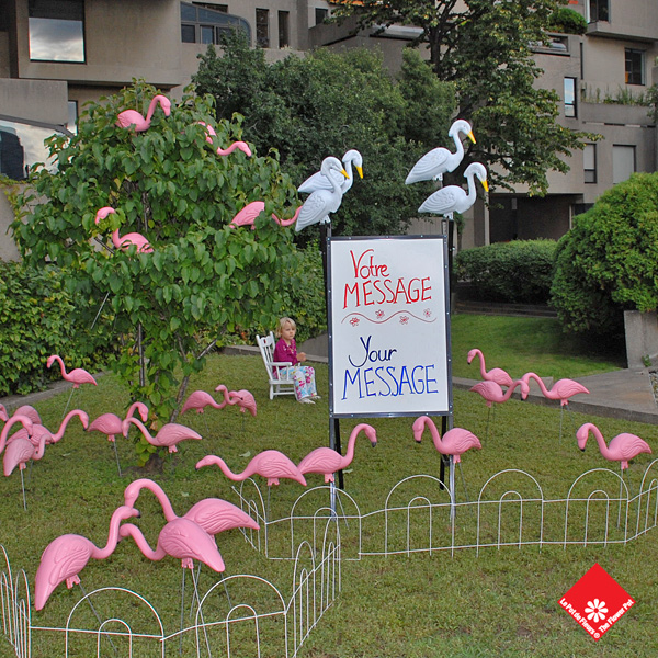 Set up the Montreal lawn flamingos and custom signs yourself!