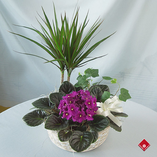 Blooming garden plant arrangement in a wicker basket.