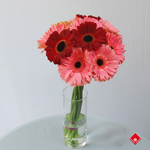 Colorful gerbera bouquet ready for Montreal delivery.