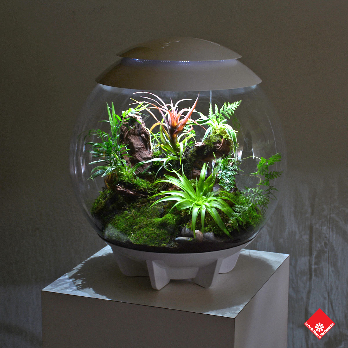 Wake up to nature with this soothing green globe on your bedside table. Fish are too high maintenance, get a terrarium from The Flower Pot instead.