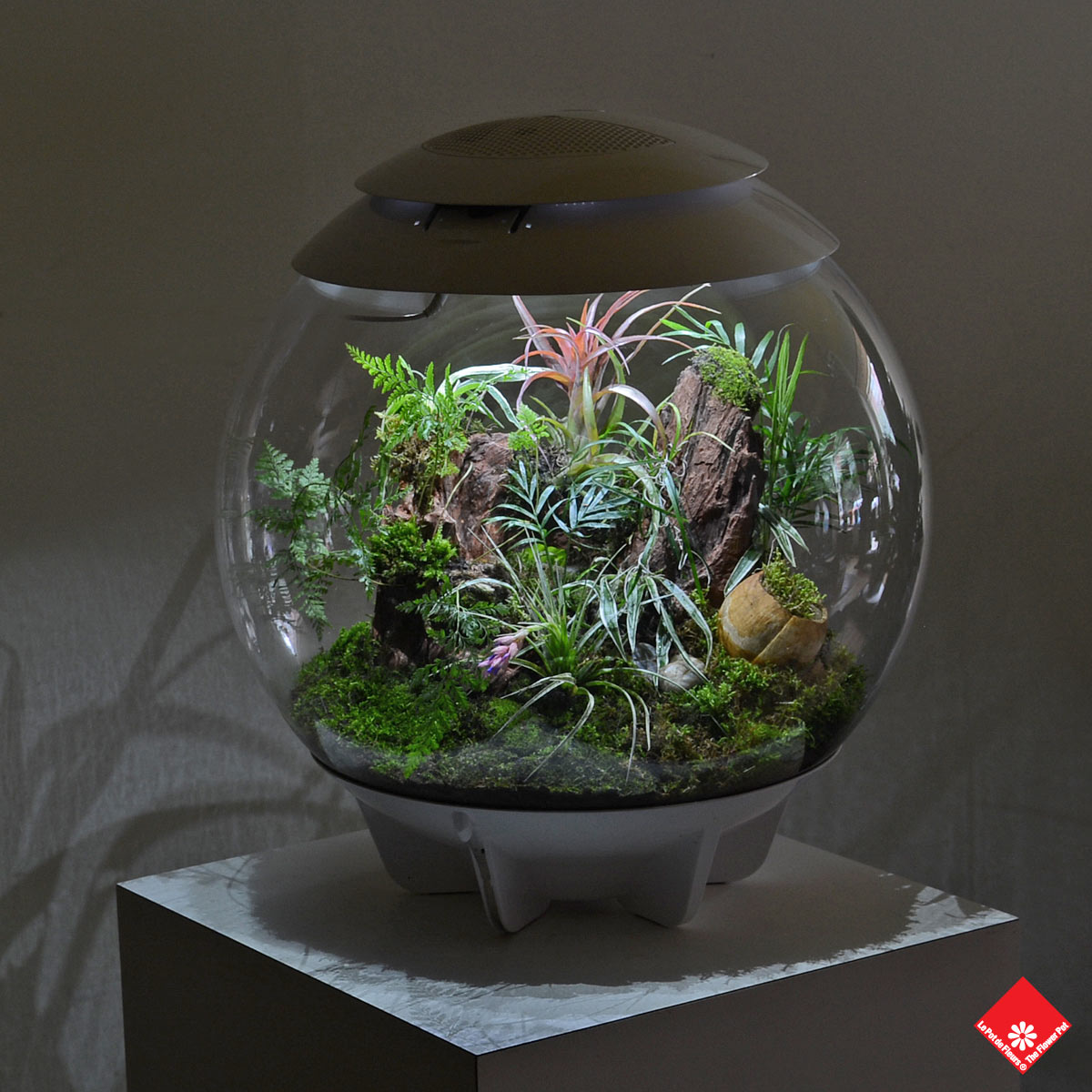 Bring the Montreal Biodôme home with this micro environment in a globe. Choose yours from The Flower Pot.
