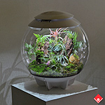Bring the Montreal Biodôme home with this micro environment in a globe. Choose yours from The Flower