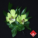 Irish green orchid corsage