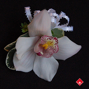 Cymbidium orchid corsage for a Montreal event.