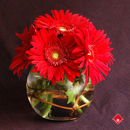 Red gerbera daisy centerpiece for a Montreal wedding.