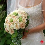 A round rose bridal bouquet with cascading ivy.