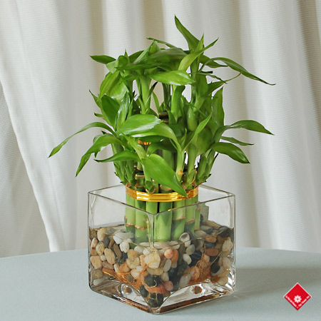 Lucky bamboo tower