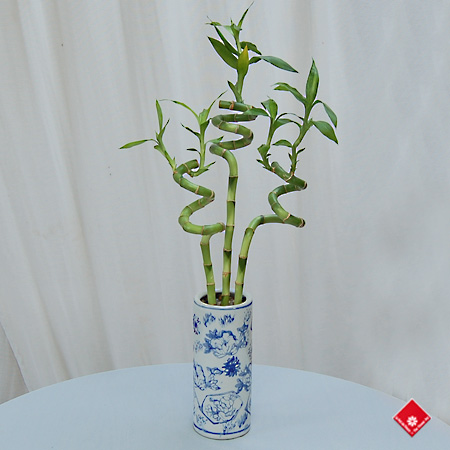 Spiral Bamboo Stalks in a Blue Chinese Vase