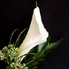 Calla lily boutonnière for a Montreal groom.