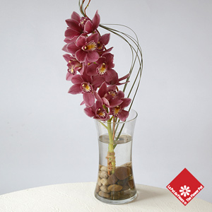 Orchid Vase for Administrative Professionals Week in Montreal.