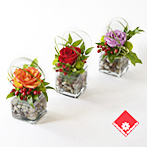 Rose arrangements in square glass vases.