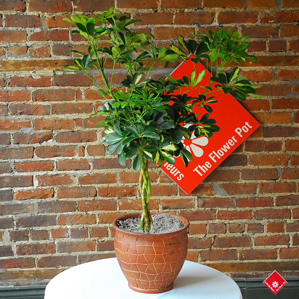 Order Plants Online For Montreal Plant Delivery 183 The