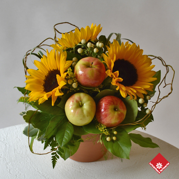 Montreal sunflower and apple arrangement in a terracotta pot.