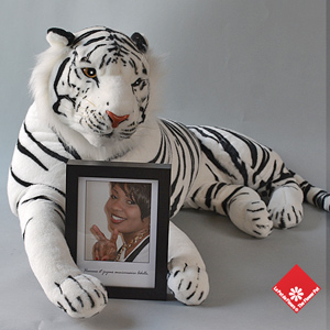 framed photo and wild animal