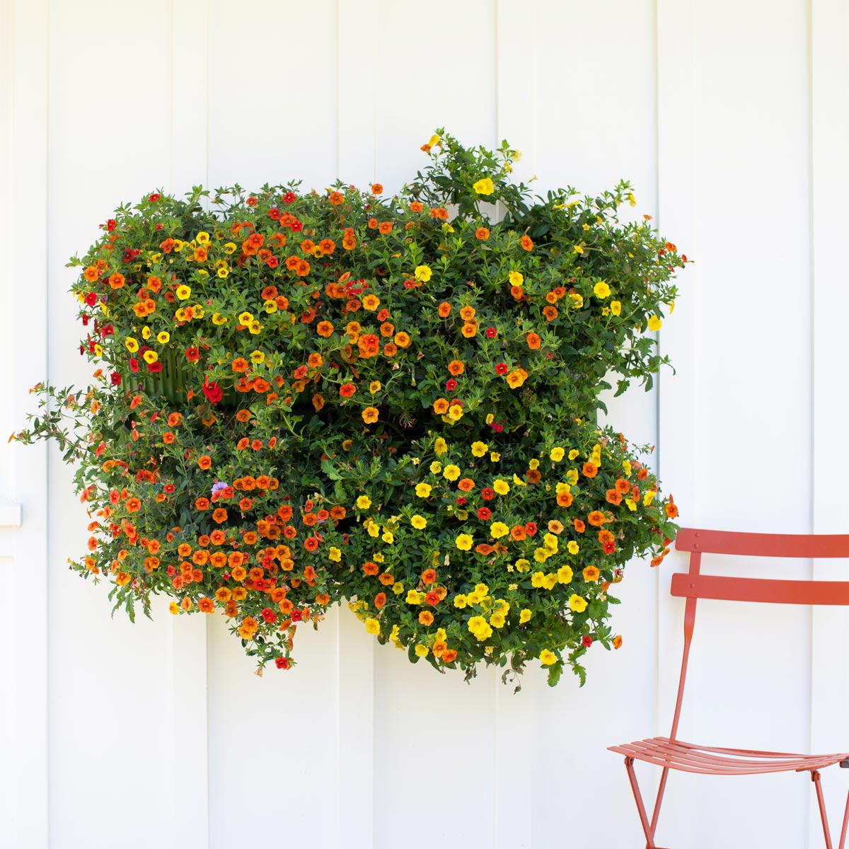 Make your wall a wall of plants with Woolly wall planters. Your vertical garden will add a unique touch to your décor.