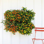 Make your wall a wall of plants with Woolly wall planters. Your vertical garden will add a unique to