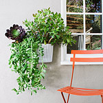 Make the inside of your Montreal home an extension of what's outside by making live greenery the foc